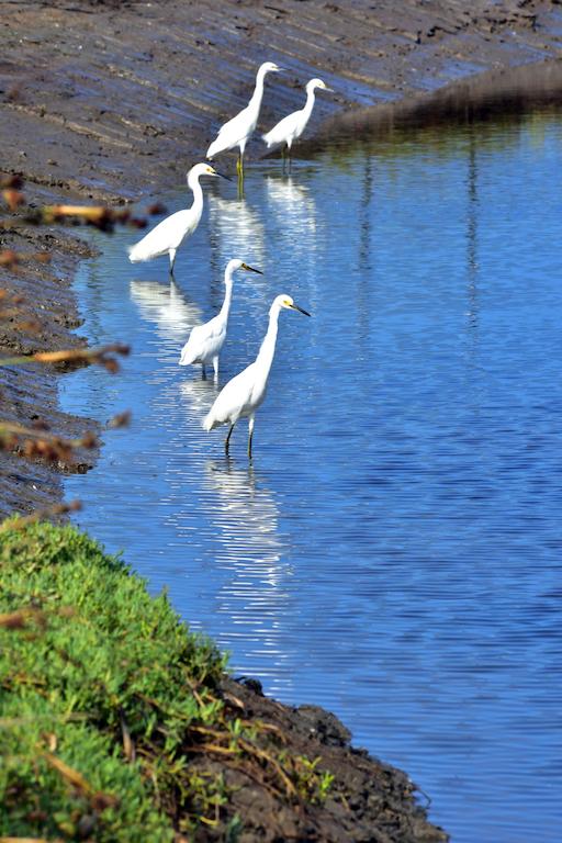 4 egrets