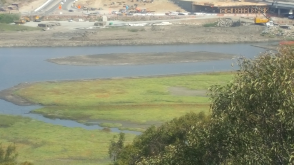 New Mudflat with flooded channel from Annies